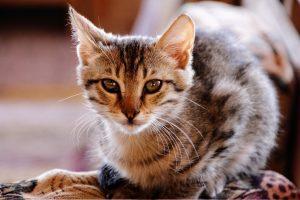 cat-1861118_1280